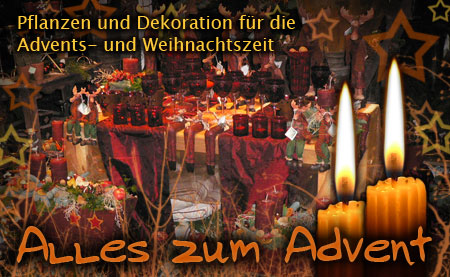 Alles zum Advent